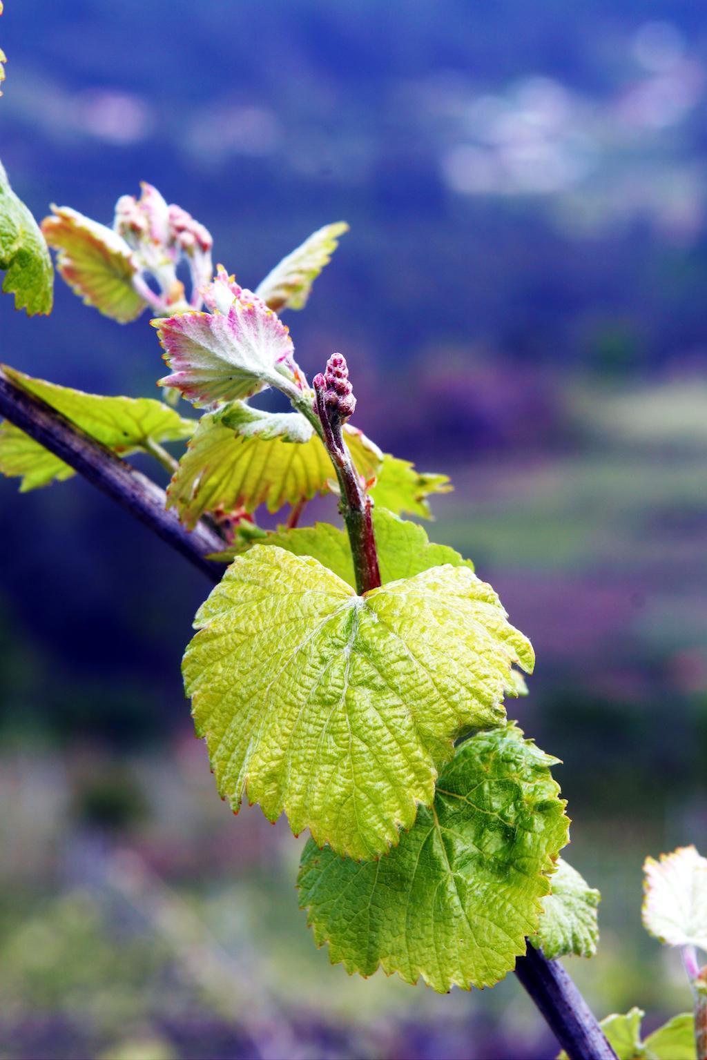 vinhos-verdes